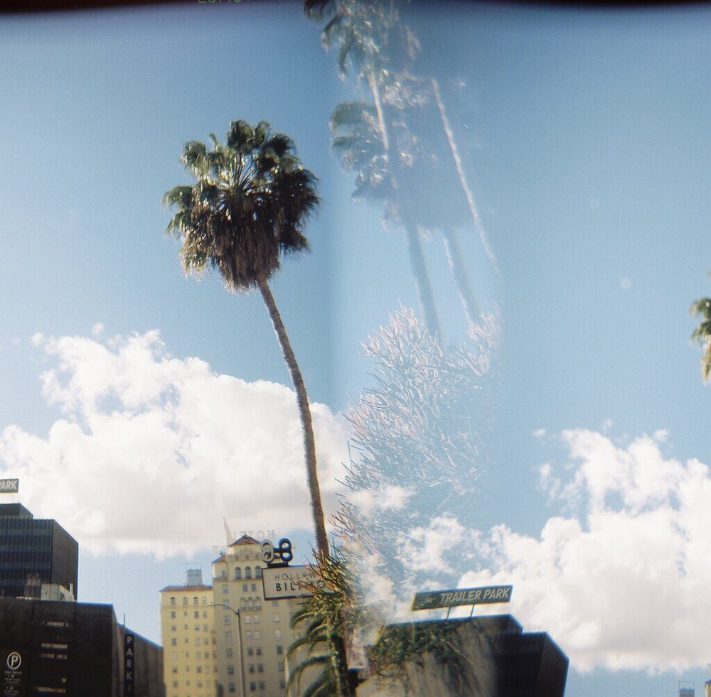 A palm tree in Hollywood shot on 120 film with a Holga